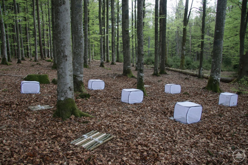 Im Nationalpark Bayerischer Wald wurde für die Studie Totholz ausgelegt.