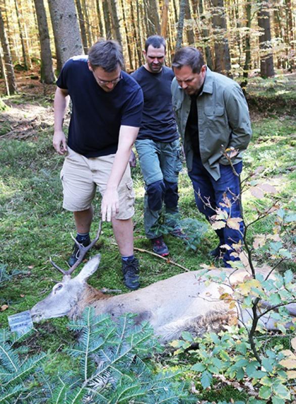 An einem verendeten Rothirsch untersuchten die Forscher um Christian von Hoermann (Mitte), Eric Benbow (rechts) und Kay Hammermeister das Stadium der Zersetzung.