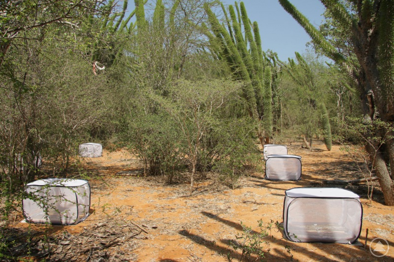 Die gleiche Versuchsanordnung wie im Bayerischen Wald fand man auch in Madagaskar