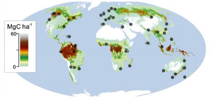 Weltweit wurden 55 Standorte festgelegt, an jedem wurden drei heimische Baumarten und ein Besenstiel ausgelegt.