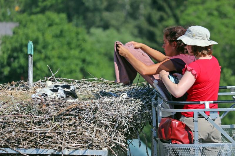 Um die Ringe anzulegen, brachte die Feuerwehr zwei Expertinnen vom LBV mit der Drehleiter zum Nest auf dem Dach der Nationalparkverwaltung.