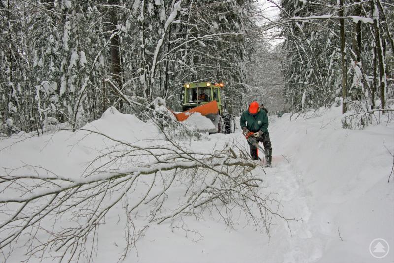 Nationalparkmitarbeiter sind aktuell damit beschäftigt die Winterwanderwege Zug um Zug zu räumen und freizuschneiden.