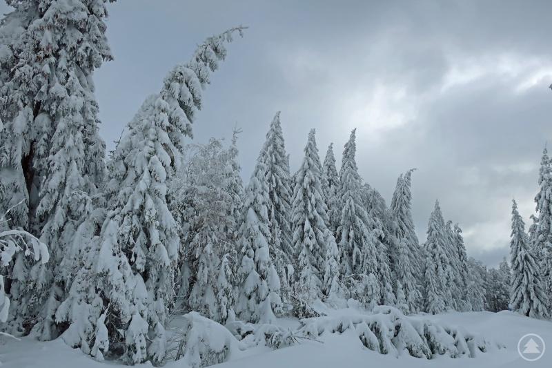 Gerade in den Hochlagen des Nationalparks drohen einige an Wanderwegen stehende Bäume akut zu brechen.