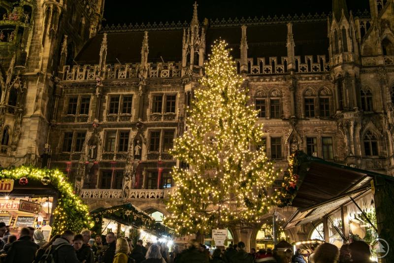 Prachtvoll leuchtet der Christbaum aus dem Landkreis Freyung-Grafenau vor dem Münchner Rathaus.