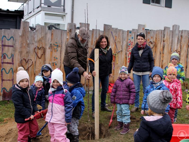 In Patersdorf halfen die Kindergartenkinder kräftig mit, während Klaus Eder den Baum und Brigitte Blaim (Landwirtschaftsamt Regen) den Pflanzpfahl hielten, achtete Kindergartenleiterin Cornelia Brem darauf, dass jedes Kind mithelfen konnte.