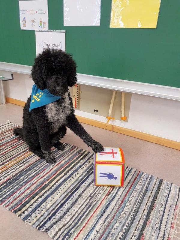 Schulhund und Mathematikhilfskraft Othello lehrte den Schülern seine Erfolgsformel: Motivierte Lehrer plus coole Schüler mal perfekter Bildungsweg ist gleich: Realschule Grafenau.