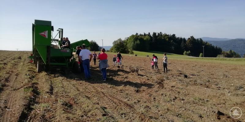 Die Kinder durften sich ihre Kartoffeln, die sie selbst gesammelt hatten, mit nach Hause nehmen.