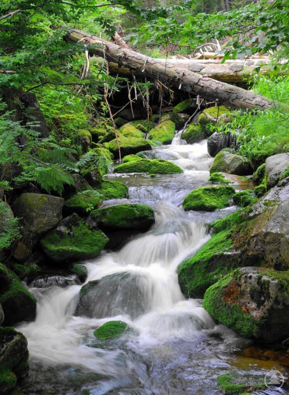 Wasser ist ein prägendes Element für die natürlichen Lebensgemeinschaften im Nationalpark. Nun widmet sich ein Film diesem Thema.