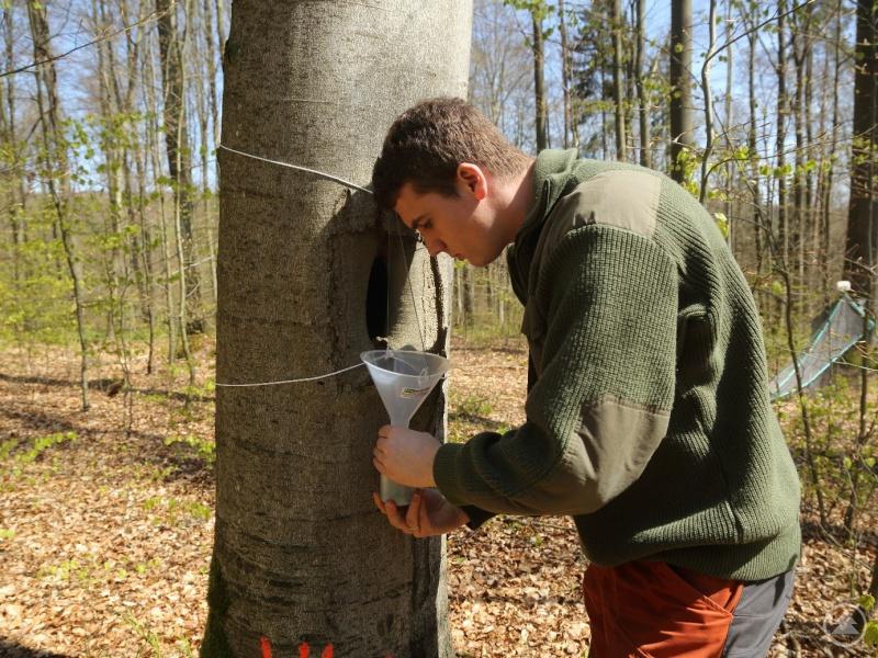 Simon Thorn beim Leeren einer Insektenfalle im Nationalpark Bayerischer Wald. Dadurch kann man Rückschlüsse auf die Artenvielfalt des jeweiligen Gebietes ziehen.