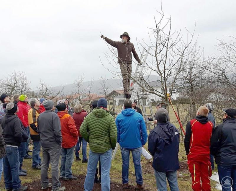 Klaus Eder beim Beschneiden des Baumes.