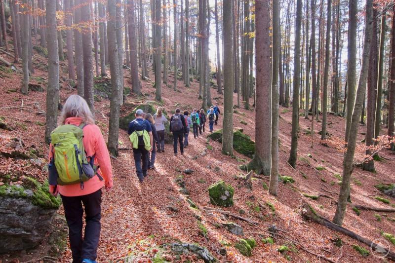 Exkursion: Ein Teil der Natur- und Landschaftsführer während einer Lehrwanderung im Naturpark Bayerischer Wald.