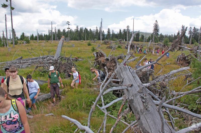Die 33 Teilnehmer aus sechs tschechischen, deutschen und österreichischen Nationalparks waren auch in der wilden Natur – etwa auf dem Windwurfsteig unterhalb des Großen Falkenstein – unterwegs.