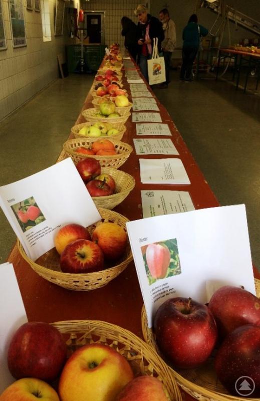 Eine Vielzahl verschiedener Obstsorten kann in Kringell besichtigt werden.