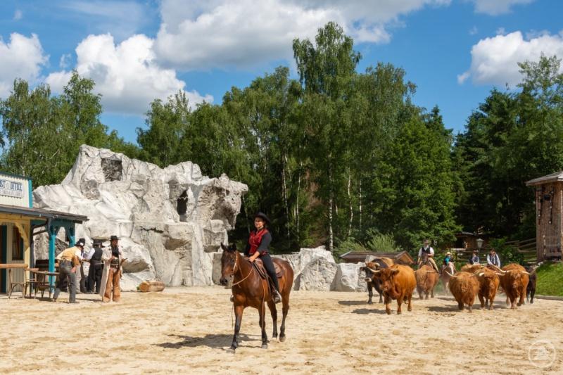 Echtes Country-Feeling: Rindertrieb während der KarlMay-Spiele