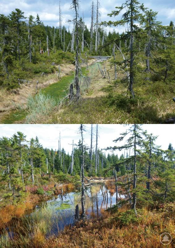 Der Vorher-Nachher-Vergleich vom Tieffilz zeigt deutlich, wie signifikant der Wasserstand im Moor nach der Renaturierung angestiegen ist.