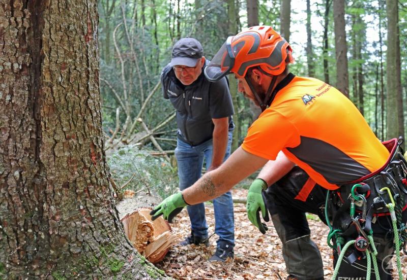 Werner Kaatz, Leiter der Nationalparkdienststelle Riedlhütte (links), und Forstwirtschaftsmeister Michael Lender besichtigen die Schnittstelle einer Tanne, die aufgrund von Fäulnis gefällt werden musste.