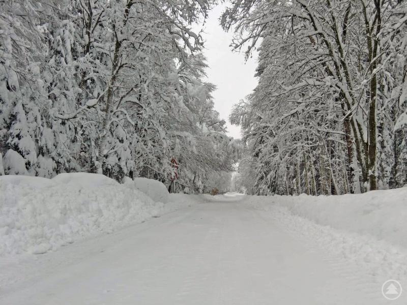 Stark abbruchgefährdete Äste und Baumkronen gibt es derzeit an vielen Stellen im Nationalpark - wie hier auf dem Winterwanderweg zur Racheldiensthütte.