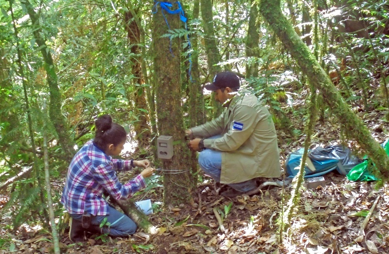 Andrea Morales und ein Ranger bei der Montage einer Wildkamera in El Salvador.