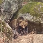 Tierfreigelände - Nationalpark Bayerischer Wald