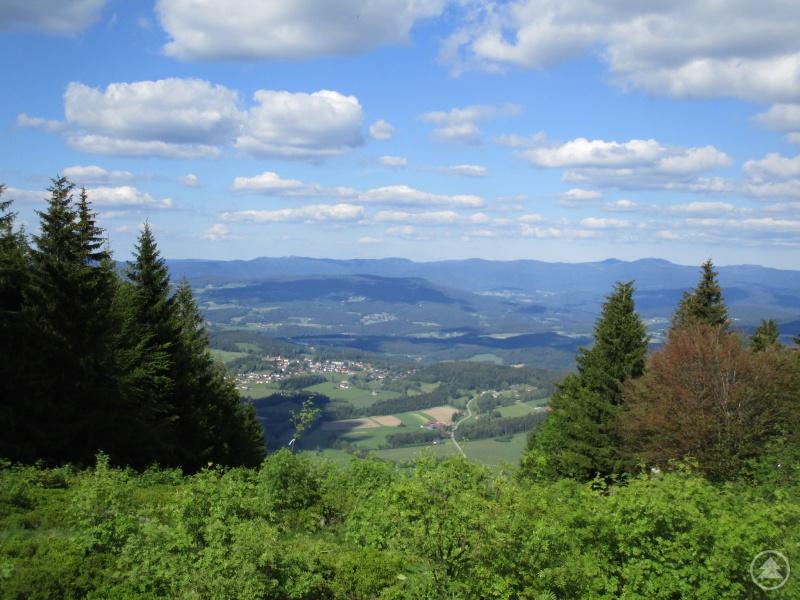 Laufend den Pröller 1.048 m erklimmen – beim Einsteigerkurs Trailrunning.