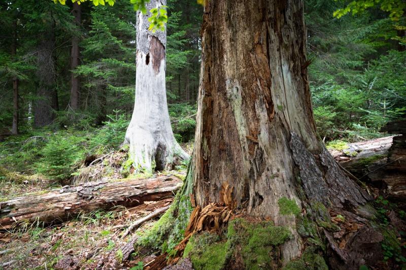 Eine leichte, meditative Wanderung gibt's am 4. September. (Foto: Markus Bolliger/Nationalpark Bayerischer Wald – Freigabe nur in Verbindung mit dem Veranstaltungshinweis)