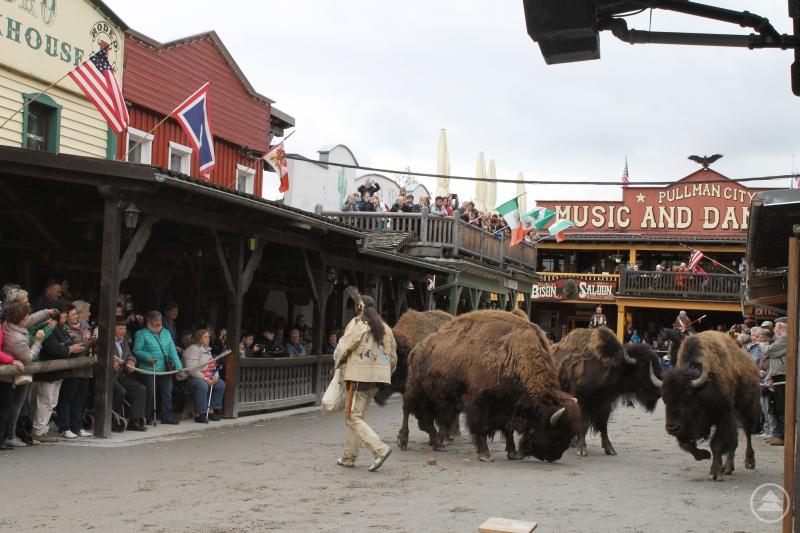 Ein Highlight der American History Show waren die großen Büffel, die durch die Main Street zwischen den Zuschauern hindurchgeführt wurden.