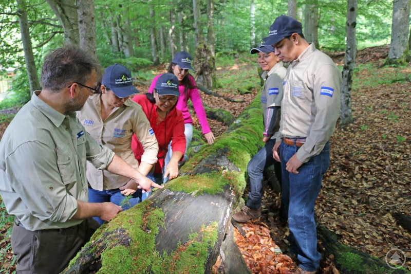 """Ranger Mario Schmid (l.) erläuterte den Gästen aus El Salvador anhand einer jungen Fichte auf einem abgestorbenen Baumstumpf den Gedanken """"Natur Natur sein lassen""""."""