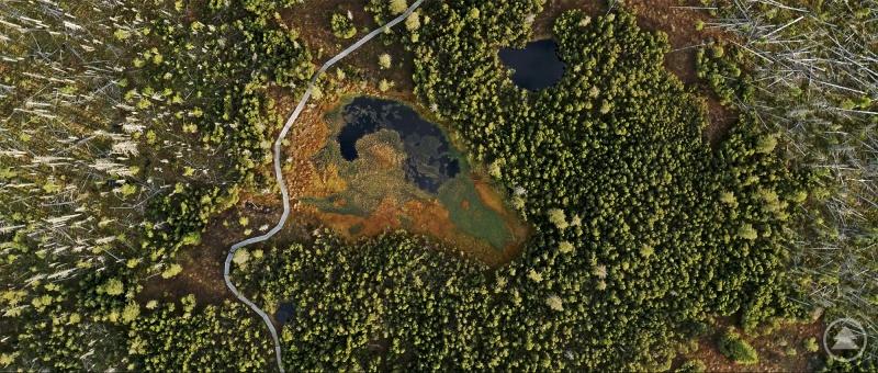 """Imposante Einblicke in die unberührte Natur des Nationalparks Bayerischer Wald liefert der Kinofilm """"DER WILDE WALD""""."""