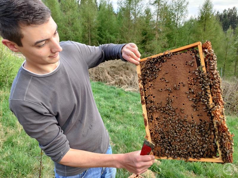 """""""Aus dieser Wabe schlüpfen in den nächsten Tagen ca. 9.000 junge und gesunde Bienen und bringen schon bald leckeren Waldhonig. So macht Imkern Spaß"""" lacht Weber."""