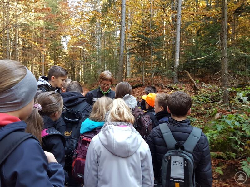 Gespannt lauschen die Fünftklässler der Waldführerin.