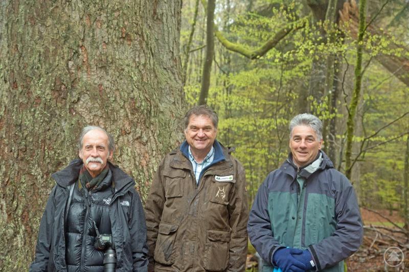 Zwei der renommiertesten Teilnehmer der Tagung waren Reed Noss (links) und David Lindenmayer, die mit Nationalparkleiter Franz Leibl im Rahmen einer Exkursion unter anderem die Waldhaustanne im Hans-Watzlik-Hain besuchten.